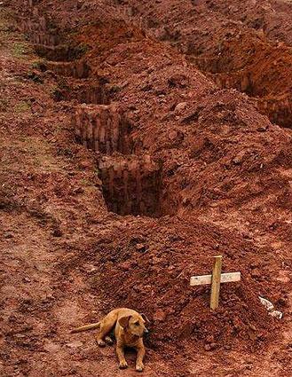 Un perro de nombre Leao junto a la tumba de su dueño tras los aludes de tierra en Río de Janeiro en el año 2011-Fidel Ernesto Vasquez